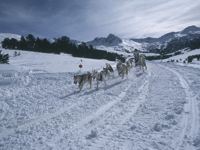 Dog sledging.  Mushing. Port Ainé.  (Daniel Julián)