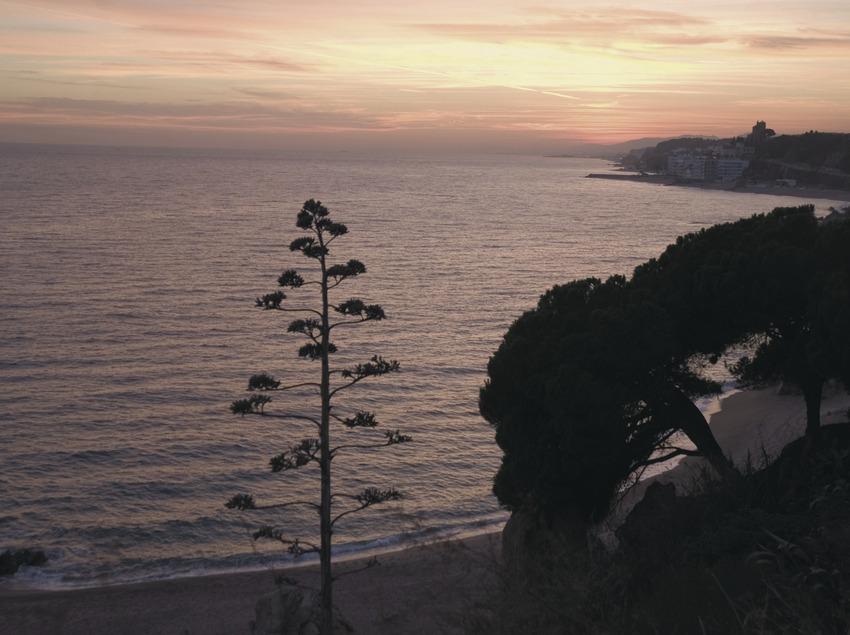Playa al atardecer.  (Turismo Verde S.L.)