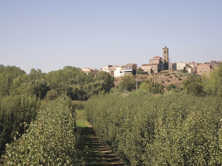 View of the town and orchard of fruit trees  (Miguel Raurich)