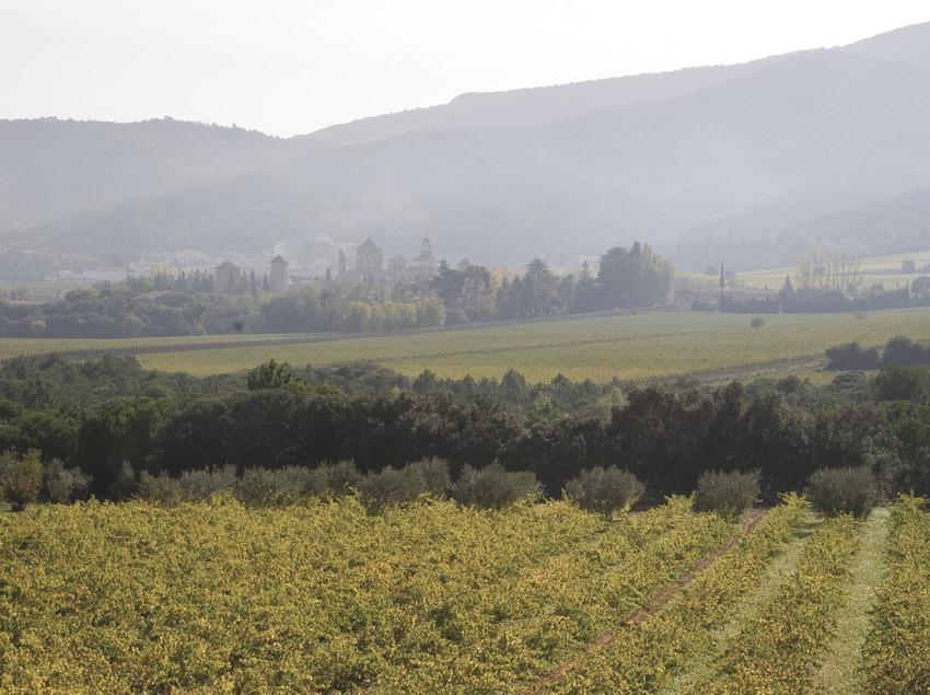 Viñedos y monasterio de Poblet