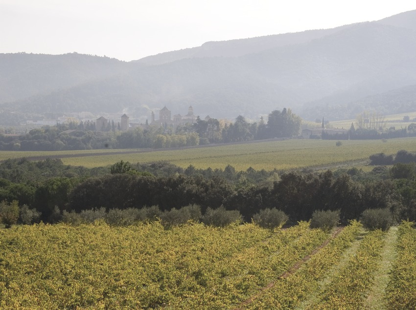 Vineyards and Poblet monastery