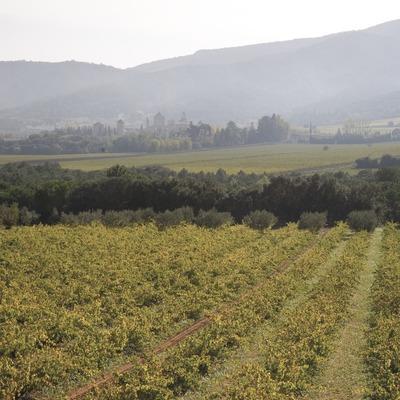 Vinyes i monestir de Poblet