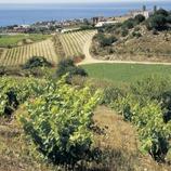 Vinyes.  (Turismo Verde S.L.)