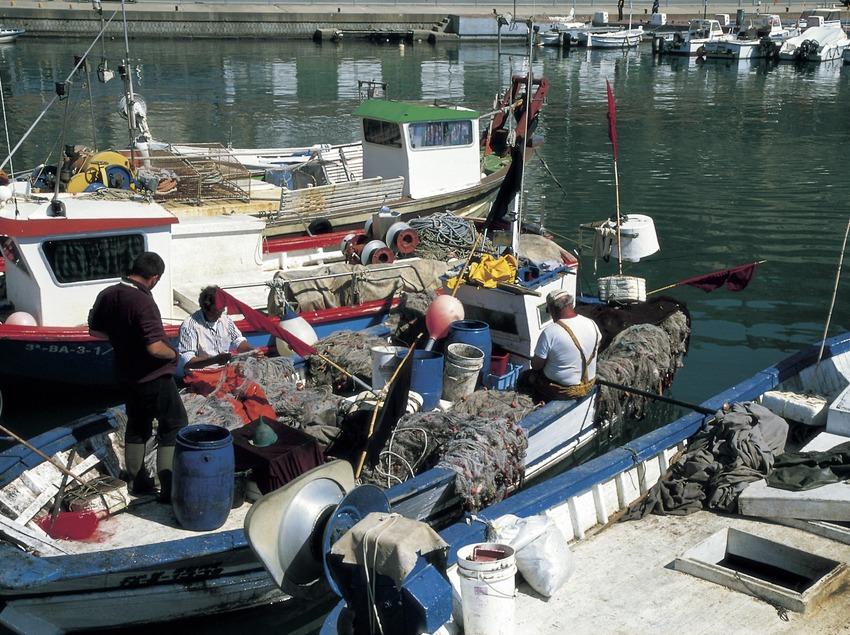 Pescadores en el puerto.  (Turismo Verde S.L.)