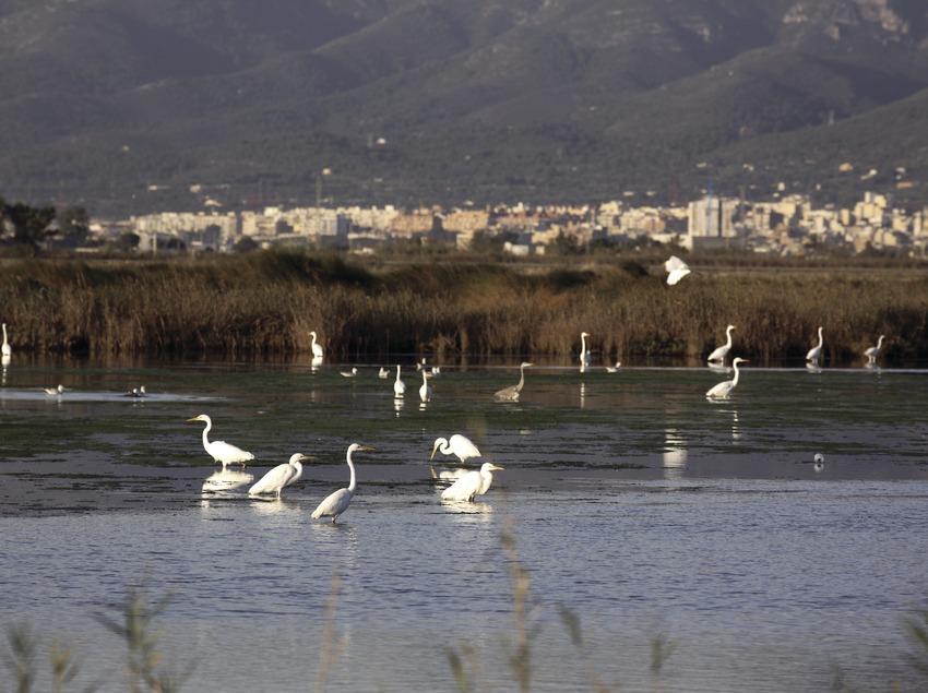 Aves en un humedal en el Parque Natural del Delta del Ebro
