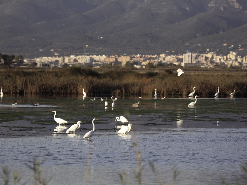 Vögel in einem Feuchtgebiet im Naturpark Delta de l'Ebre