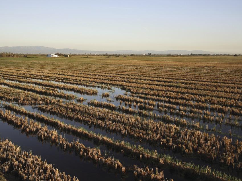 Champs de riz dans le parc naturel du delta de l'Èbre  (Miguel Raurich)