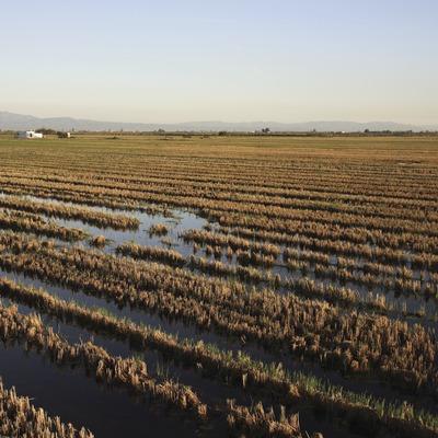 Campos de arroz en el Parque Natural del Delta del Ebro  (Miguel Raurich)