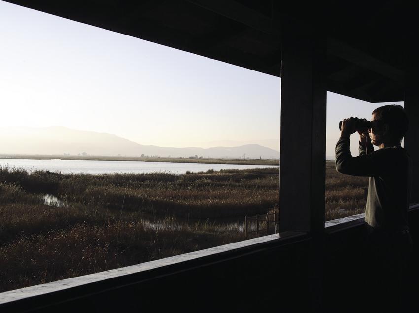 Étang de l'Encanyissada depuis un observatoire ornithologique, dans le parc naturel du delta de l'Èbre