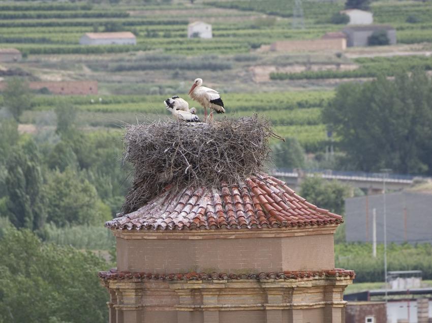 Coupole et nid de cigognes de l'église de Sant Antolí  (Miguel Raurich)