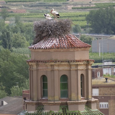 Dome and stork nest of the church of Sant Antolí  (Miguel Raurich)