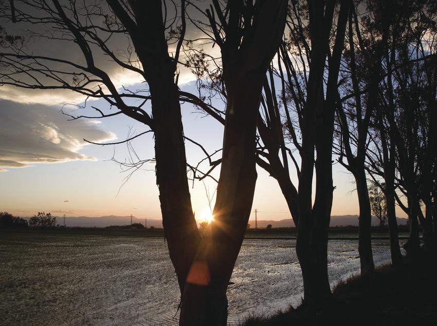 Champs de riz du delta de l'Èbre à la tombée de la nuit.