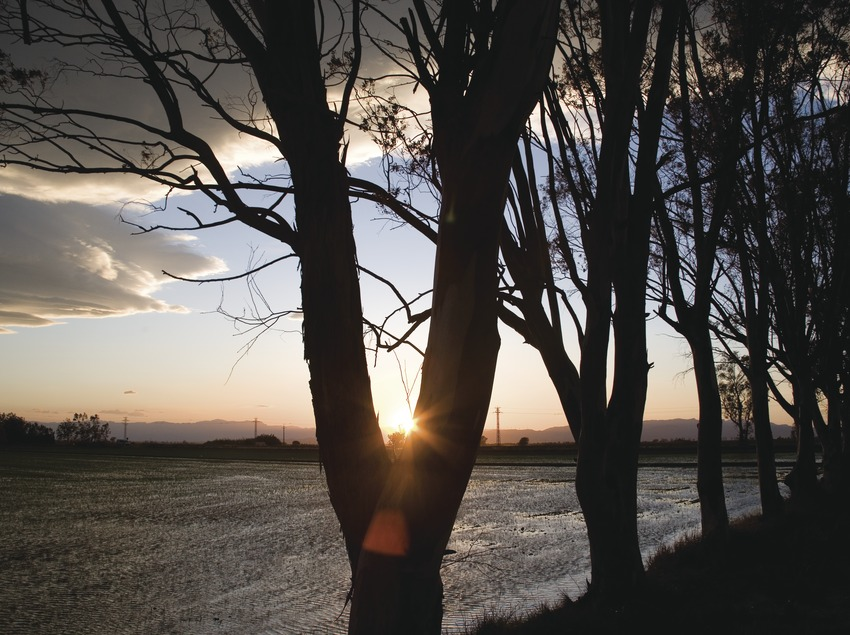 Paddy fields in the Delta del Ebro at dusk