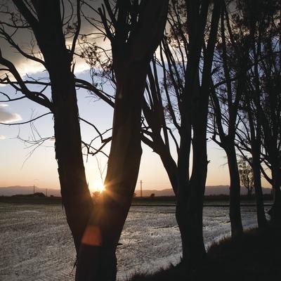 Camps d'arròs al Parc Natural del Delta de l'Ebre al capvespre