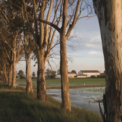 Camps d'arròs del Parc Natural del Delta de l'Ebre a la primavera  (Miguel Raurich)