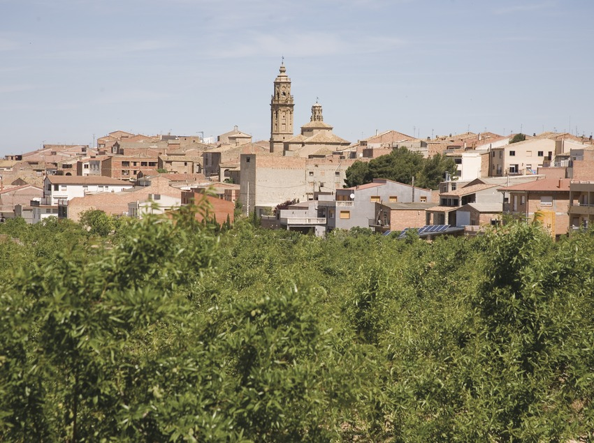 Vista de la localidad y almendros  (Miguel Raurich)