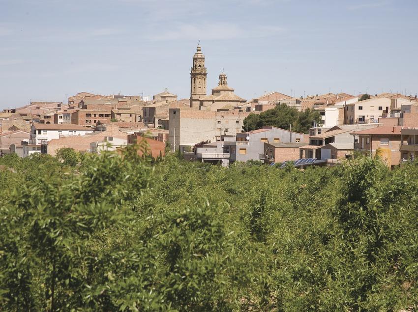 Vista de la localitat i ametllers