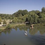 Parque del Río a la orilla del Noguera Ribagorçana  (Miguel Raurich)