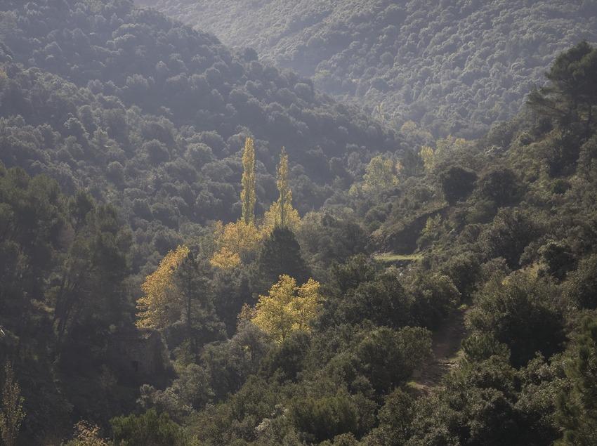 Bois près du monastère de Poblet.  (Miguel Raurich)