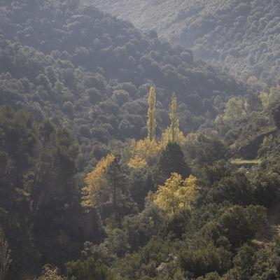 Bosc de prop del monestir de Poblet  (Miguel Raurich)