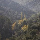 Bosque cerca del monasterio de Poblet  (Miguel Raurich)