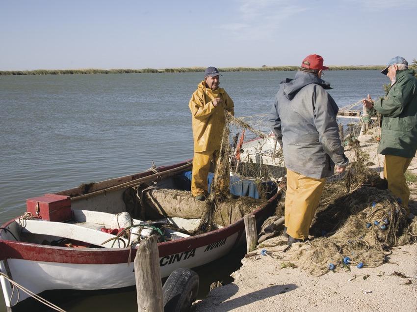 Fischer beim Einsammeln der Fische in der Nähe der Ebro-Einmündung  (Miguel Raurich)
