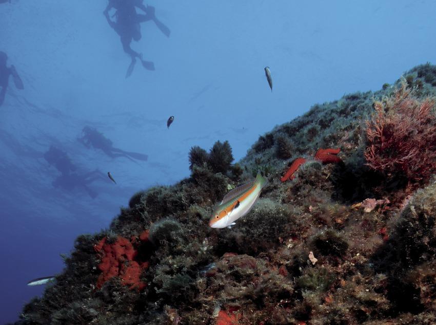 Plongeurs à un palier de décompression dans la partie supérieure du Furió Fitó
