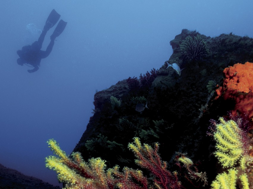 Gorgónias rojas (Paramuricea clavata) y submarinista en lo alto del Tabal (Andreu Llamas. Editorial Anthias, S.L.)