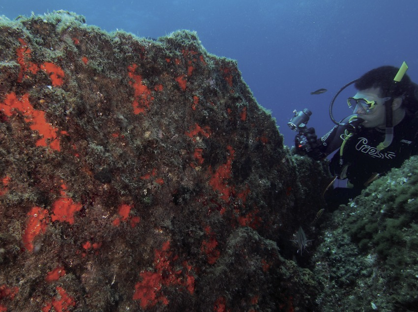 Plongeur observant une paroi du précoralligène au promontoire de Palamós