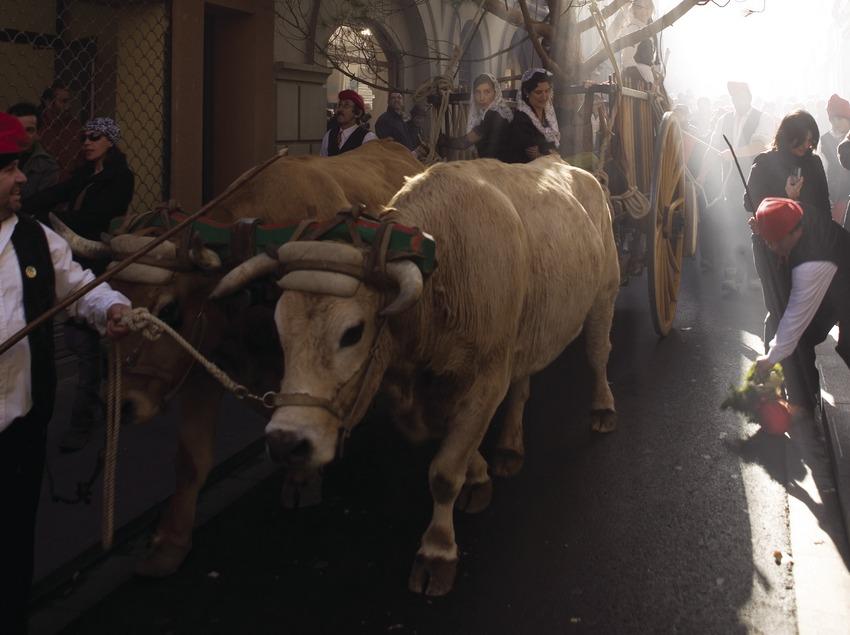 Arrivée du cortège dans les rues du village à la Festa del Pi (fête du pin). (Oriol Llauradó)