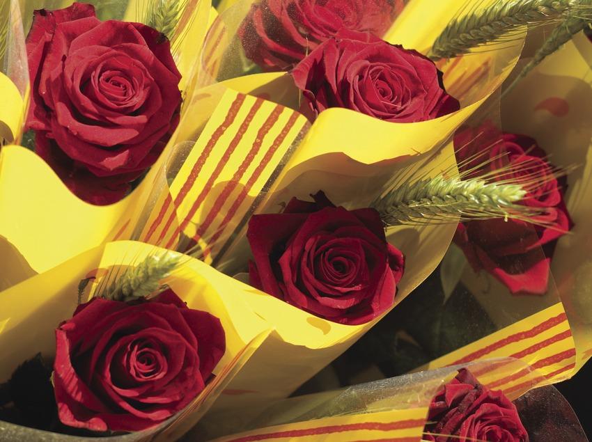 Roses. Festa de Sant Jordi. (Oriol Llauradó)