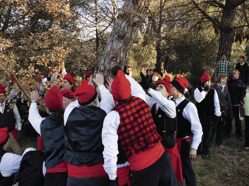 Cortada del árbol durante la Festa del Pi (Fiesta del Pino) (Oriol Llauradó)