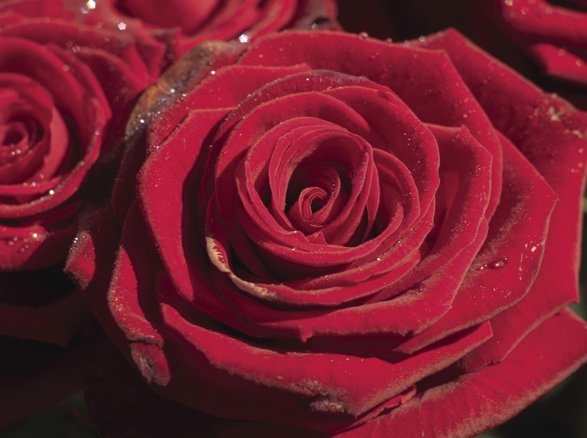 Diada de Sant Jordi (Oriol Llauradó)