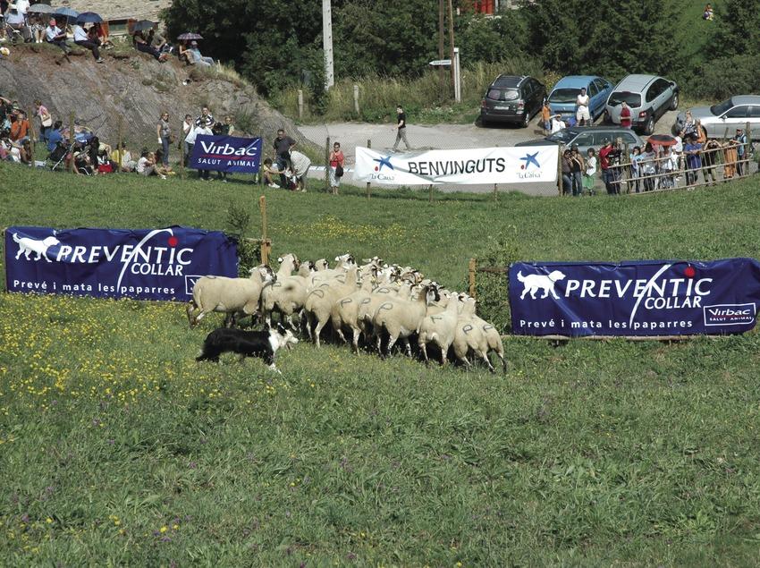 Concurs de Gossos d'Atura (Oriol Llauradó)