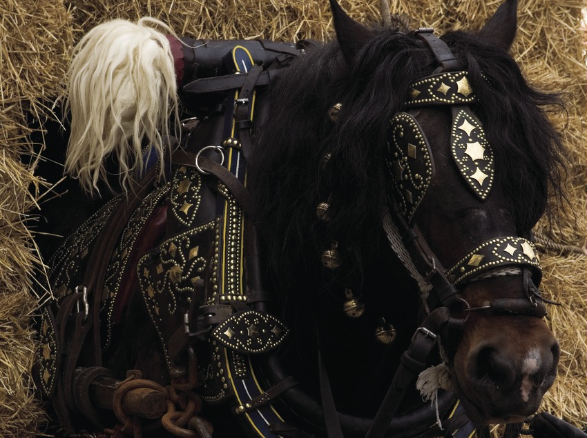 Cheval de trait à la fête des « Tres Tombs » (Oriol Llauradó)