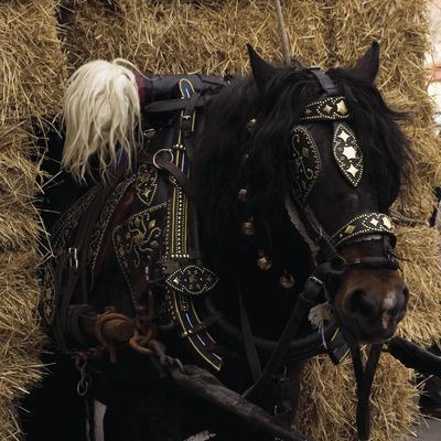 Cavall de tir durant la Festa dels Tres Tombs (Oriol Llauradó)