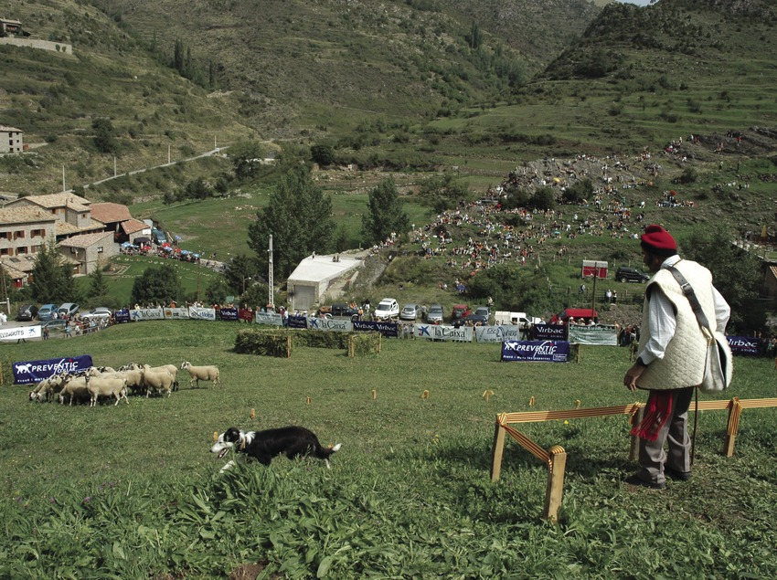 Concurso de Gossos d'Atura (Perros pastores) (Oriol Llauradó)