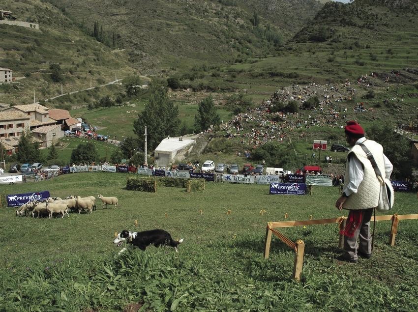 Concurso de Gossos d'Atura (Perros pastores)
