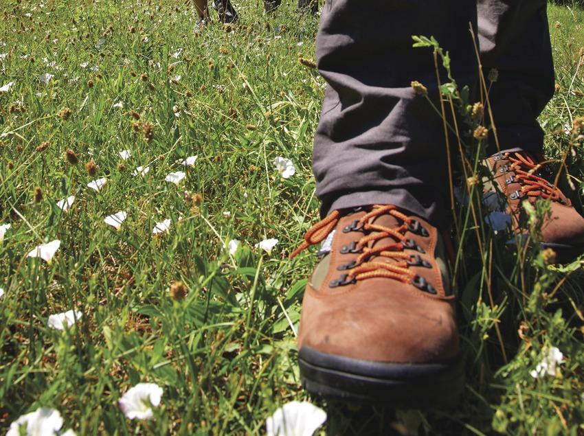 Senderisme pels boscos de l'Alt Urgell
