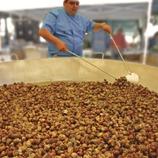 Feria del Caracol. (Lluís Carro)