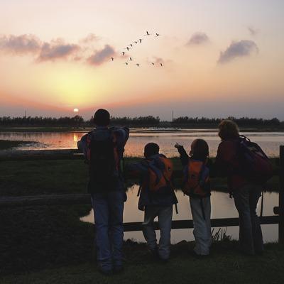 Observant aus al capvespre al Parc Natural dels Aiguamolls de l'Empordà  (Lluís Carro)