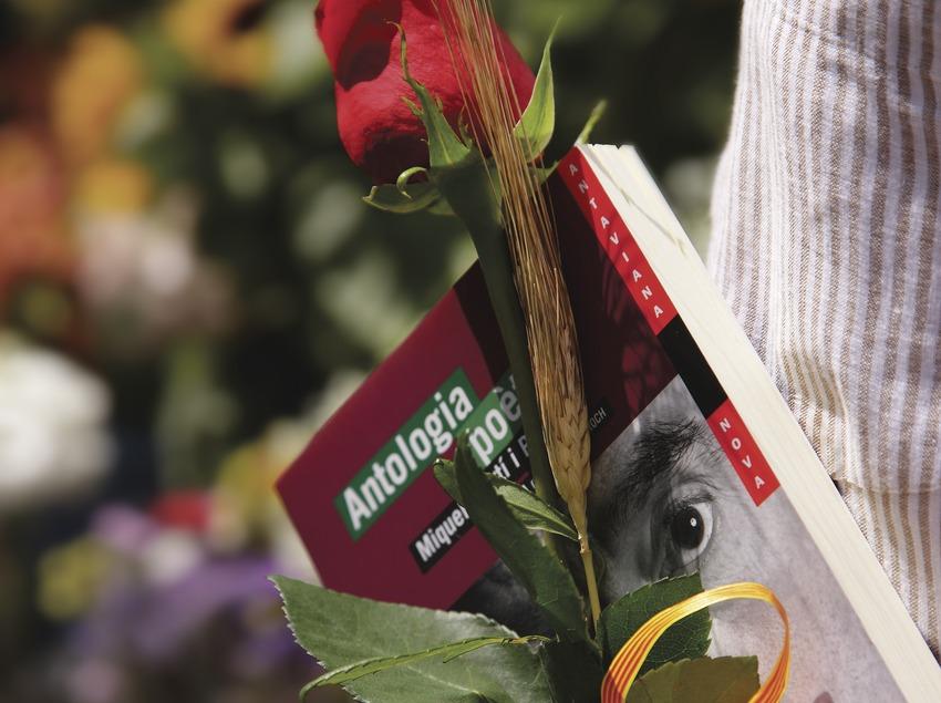 Primer pla d'una rosa i un llibre el dia de Sant Jordi  (Lluís Carro)