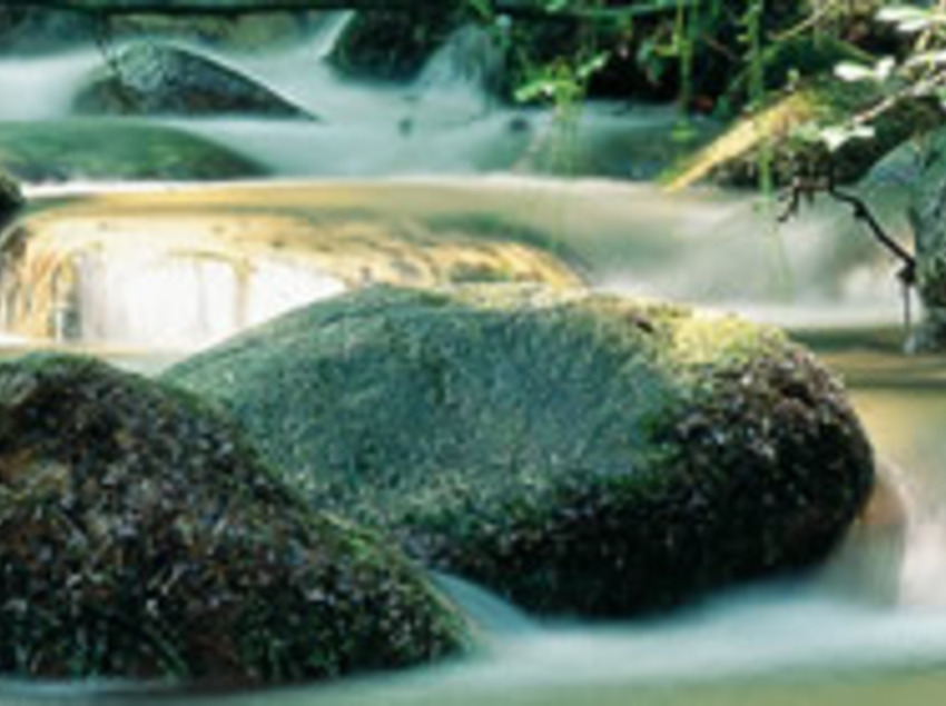 Montseny Nature Reserve