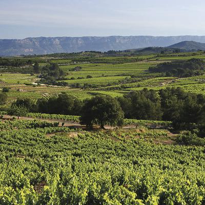Vinyes de la DO Montsant, partida de les Brugueres. Al fons la serra Major del Montsant, Parc Natural   (Imatges cedides pel Consell Comarcal del Priorat)
