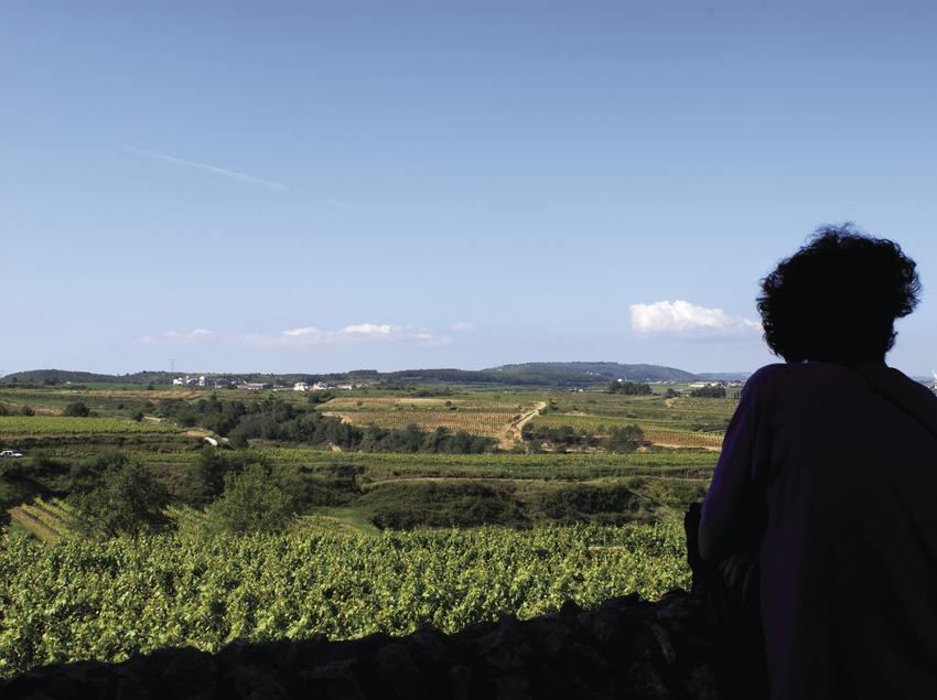Винодельческое хозяйство Albet i Noya