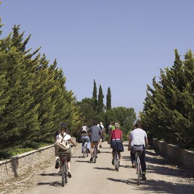 Radfahrer besucht die Weingärten der Kellereien Castellroig (Marc Castellet Puig)
