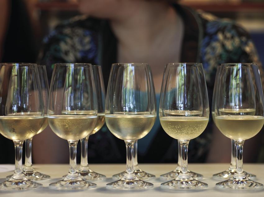 Дегустация вин в Центре энотуризма «Виноград и вино» (Aula de la Vinya i el Vi)