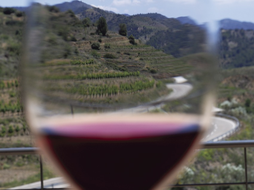 Cata de vins al celler de Bui & Giné