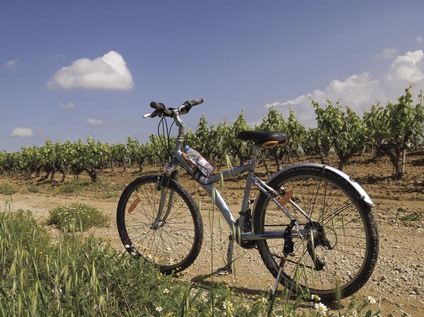 Vélo près des caves Castellroig (Marc Castellet Puig)
