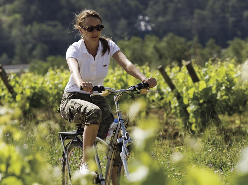 Ciclista durant una visita a les vinyes de les caves Castellroig (Marc Castellet Puig)